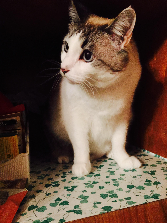 Pantry Cat
