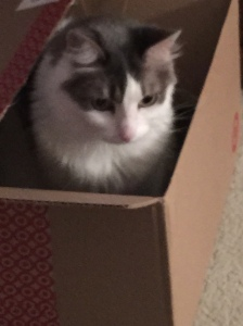 Cat in the Box!