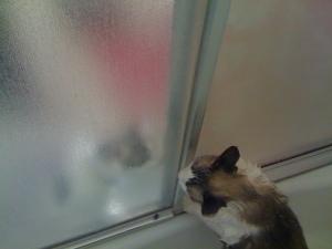 Bath Cats
