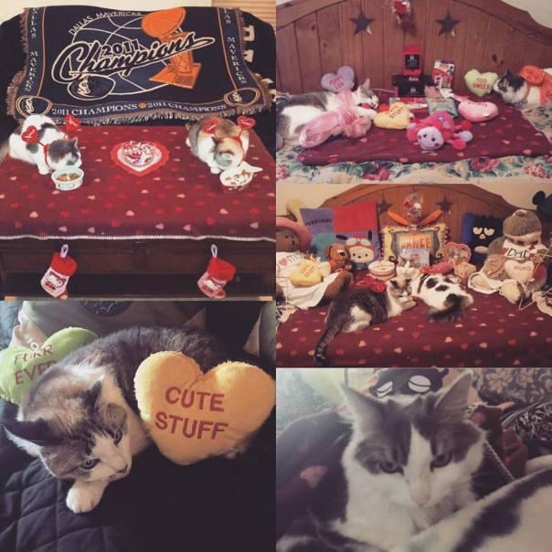 Valentine's Felines